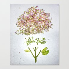 Botanical Blueprints Canvas Print