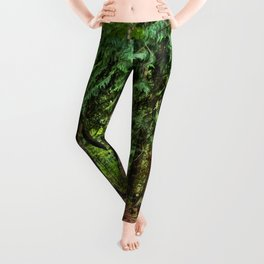 The Enchanted Way - Canadian Wilderness Forest Leggings
