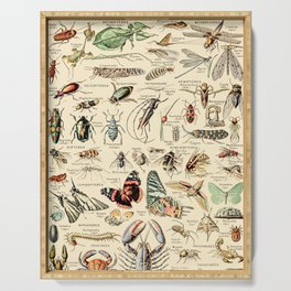 Vintage Insect Identification Chart // Arthropodes by Adolphe Millot XL 19th Century Science Artwork Serving Tray