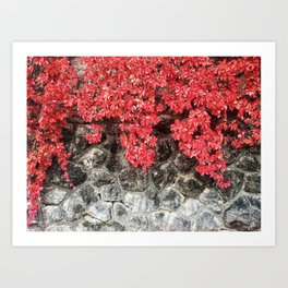 Pink red ivy leaves autumn stone wall Art Print