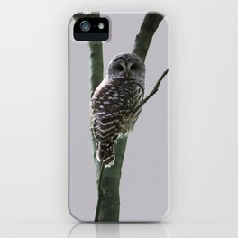 Barred Owl with Grey iPhone Case