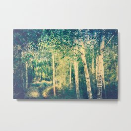 Stand of birch trees with small pathway lined in grasses running through it Metal Print