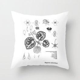 Begonia cabanillasii by Yu Pin Ang Throw Pillow