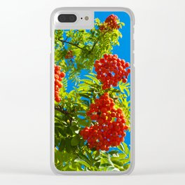 Rowan tree  with red berries Clear iPhone Case