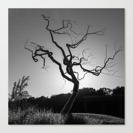 Gothic Twisted Tree - Black and White Canvas Print