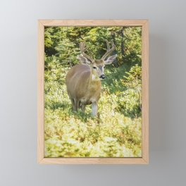 Stag at Mt Rainier Framed Mini Art Print