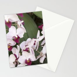 Longwood Gardens Orchid Extravaganza 1 Stationery Cards