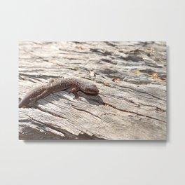 Mallee Gecko Metal Print