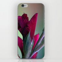 burgundy iPhone & iPod Skins featuring Burgundy by Whittle Photography