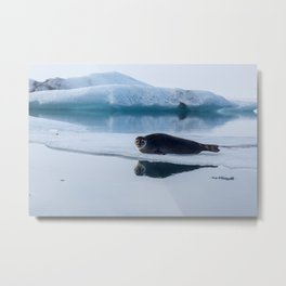 Seal at the Iceberg Lagoon Metal Print