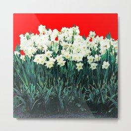 Red Whites Daffodils/Narcisus Spring Blue-Green Garden Metal Print