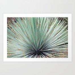 Agave Plant Art Print