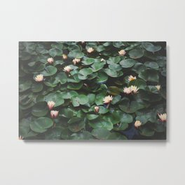 Echo Park Waterlillies Metal Print