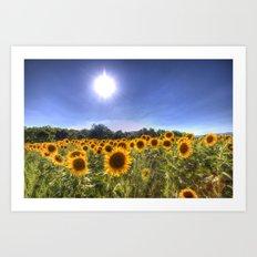 Sunflowers Of Summer Art Print