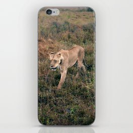 Lone Lion. iPhone Skin