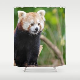 Phenomenal Lovely Little Red Panda Posing Close Up Ultra High Resolution Shower Curtain