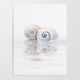 Snail Shells On Water Poster