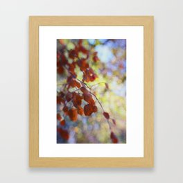 Dreaming on a Summer Day abstract nature photo Framed Art Print