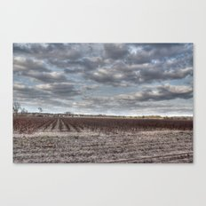 Cotton Season is Over in the South Canvas Print