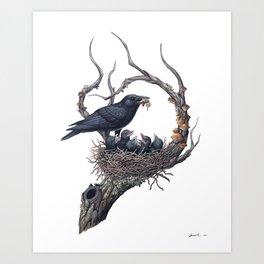 American Crow Art Print