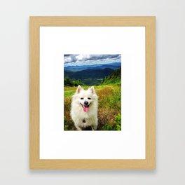American Eskimo Framed Art Print