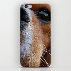 Nosey Dog iPhone & iPod Skin