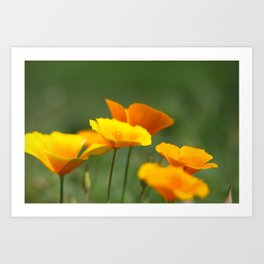 Sunshine Cups Art Print