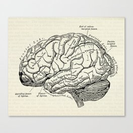 Vintage medical illustration of the human brain Canvas Print