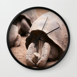 Cute Galapagos Tortoise Wall Clock