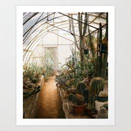Desert Cactus and Succulent Garden, Palm Springs Art Print