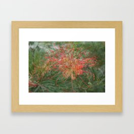 Australian Natives Photo shopped Framed Art Print