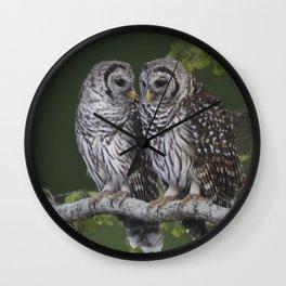 Barred Owls  Wall Clock