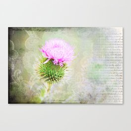 Blessed Thistle Canvas Print