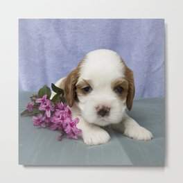 Puppy with flowers Metal Print