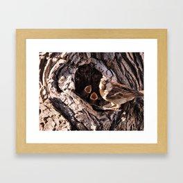 House Sparrow Keeping House Framed Art Print