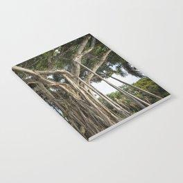 Banyan Tree at Bonnet House Notebook