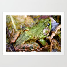 The life of a Frog Art Print