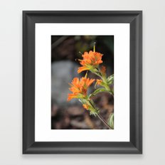 Wild Flower Framed Art Print