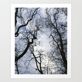 Branches of trees Art Print