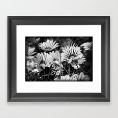 Desert Daisies (bnw) - Daisy Project in memory of Mackenzie Framed Art Print