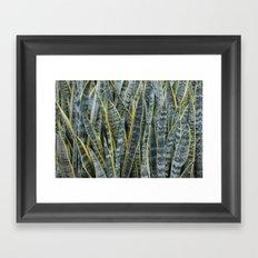 Snake Plants II Framed Art Print