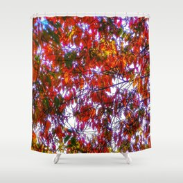 Bright colored fall foliage Shower Curtain