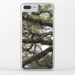 Live Oak Tree Clear iPhone Case