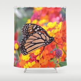 Monarch Feeding on Lantana Shower Curtain