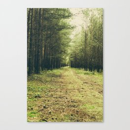 Forest Path... Canvas Print