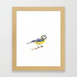 Eurasian Blue Tit Framed Art Print