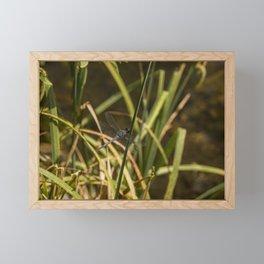 Dragonfly in the marsh Framed Mini Art Print