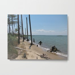 Chesapeake Bay Drift Wood Metal Print