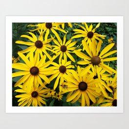 Golden Rudbeckia flowers in the garden Art Print