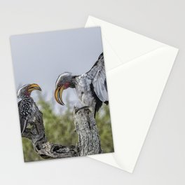 Southern Yellow-billed Hornbills Mating Display, No. 1 Stationery Cards